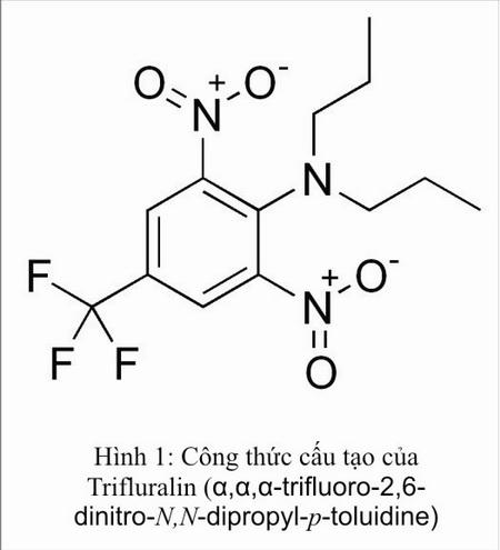 Trifluralin là một hợp chất hóa học có tên là α,α,α-trifluoro-2,6-dinitro-N,N-dipropyl-p-toluidine. Trifluralin ở dạng tinh thể có màu vàng ít hòa tan trong nước. Tuy nhiên, chúng hòa tan tốt trong một số dung môi hữu cơ như aceton, cồn và xylen
