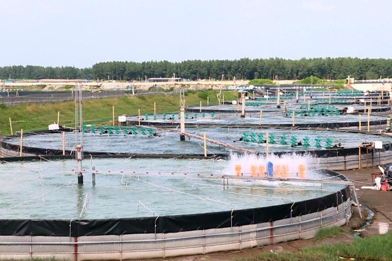 Phát huy thế mạnh là huyện ven biển, những năm gần đây huyện Tiền Hải đã hình thành những vùng nuôi tôm theo hướng công nghệ cao. Không chỉ chủ động được thời vụ, cách làm mới này còn giúp nhiều nông dân ở huyện biển thu lãi lớn.
